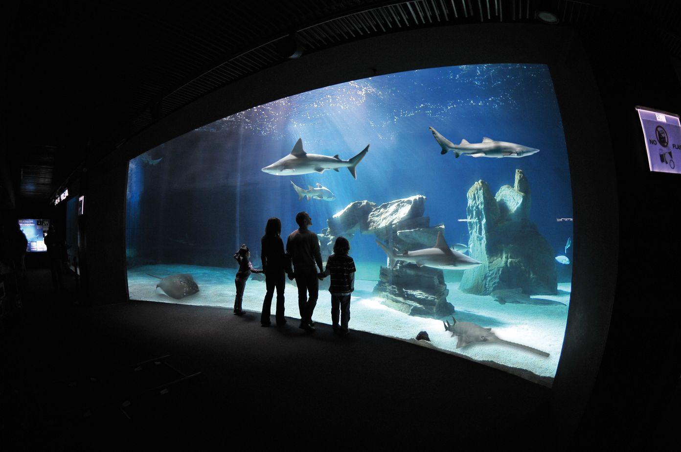 Genova e l'acquario