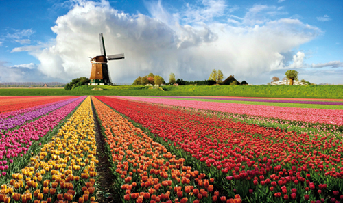 Amsterdam, Van Gogh, Mulini e Tulipani
